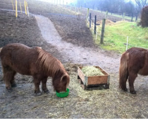 Heste på mudderfri areal på TDJ Heavymat