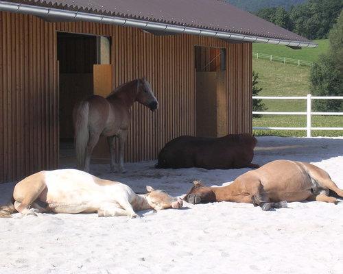 Glade heste nyder solen på underlag med TDJ Hit armering