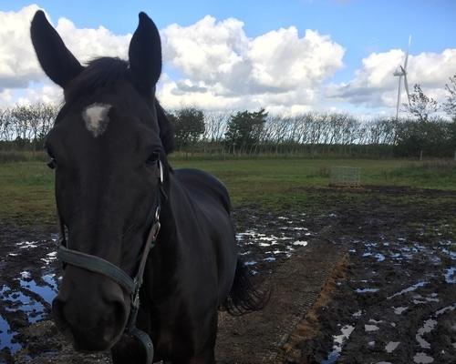 Hest på TDJ Heavymat