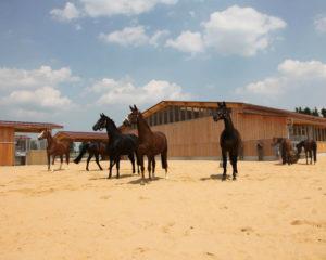 Heste på underlag af TDJ Hit armering.