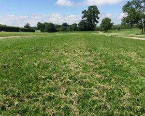 Græsfold efter græsset er groet op igennem TDJ Hit armering