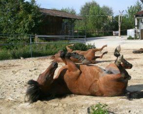 TDJ Hit armering gir et underlag hestene elsker.